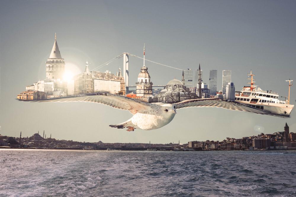 Istanbul,Seagull,,Manipulation